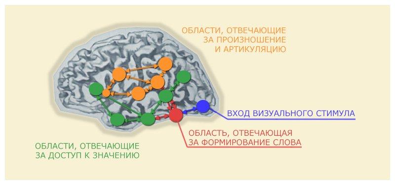 Схема работы мозга при чтении