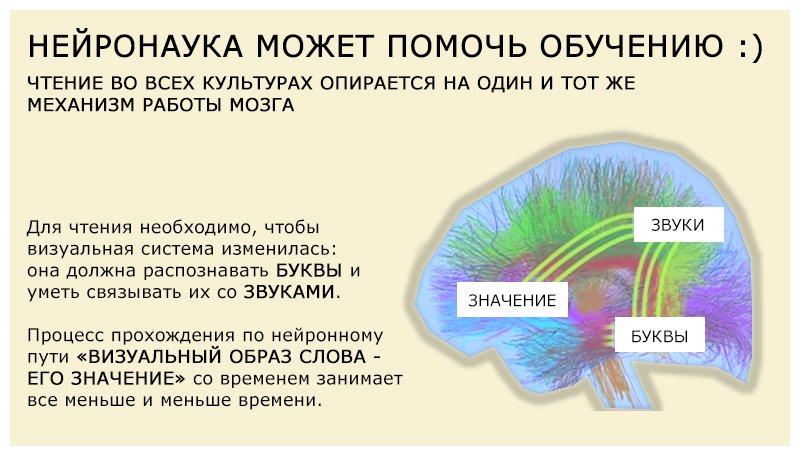 Механизм работы мозга при чтении